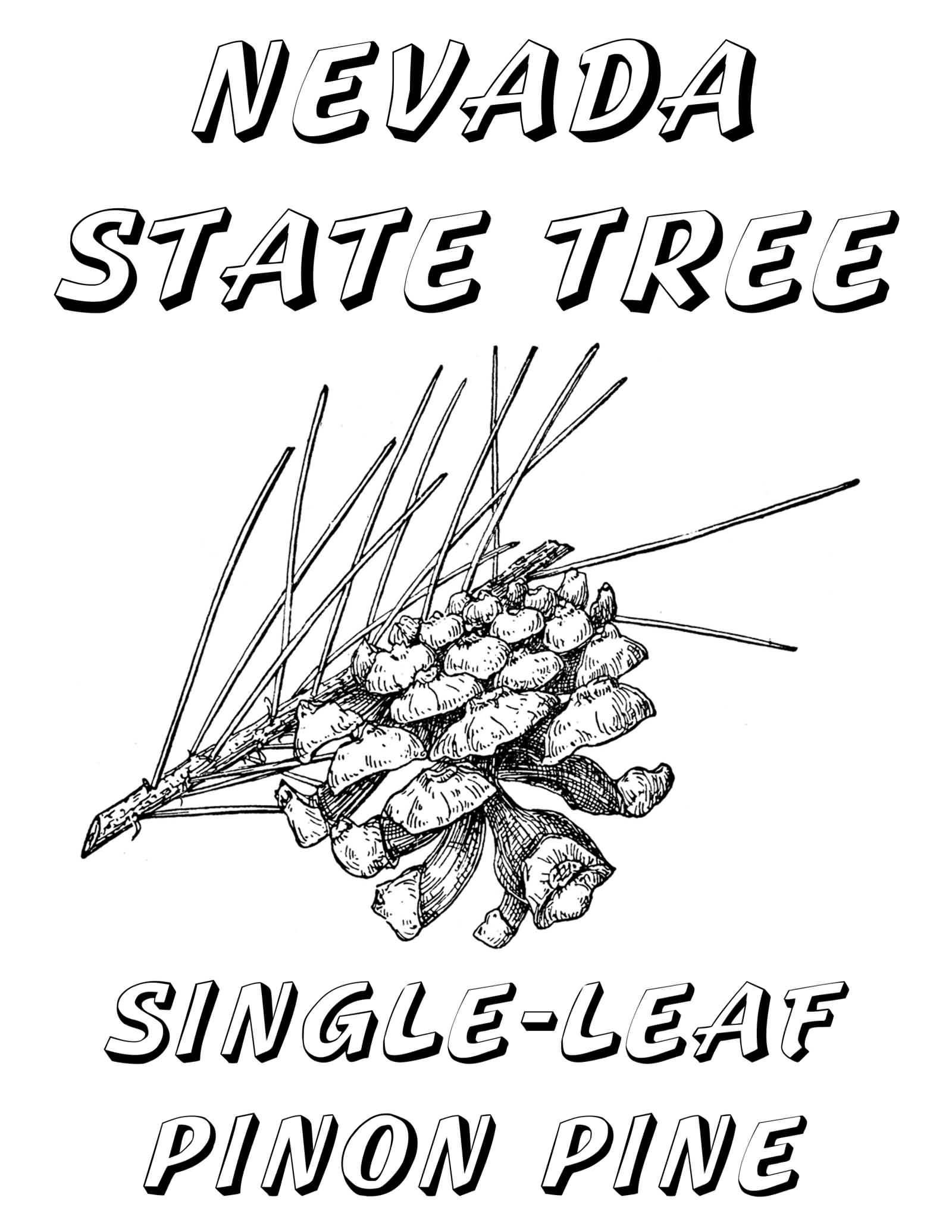 Neveda State Tree Single Leaf Pinon Pine Happy Nevada Day